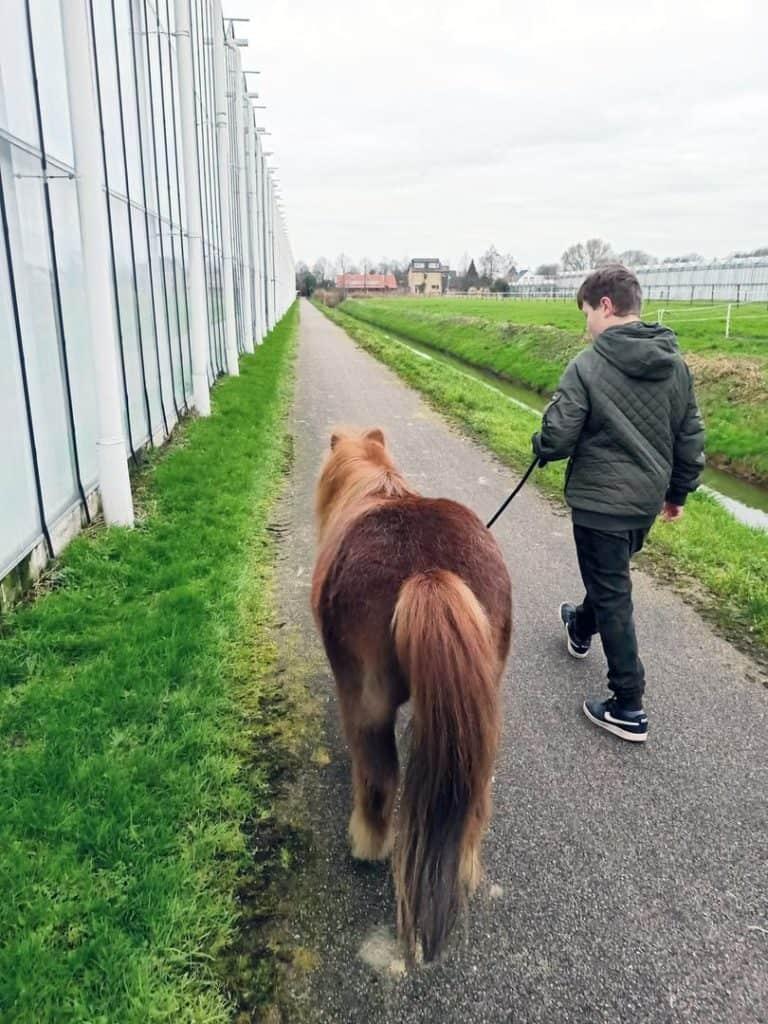 Coaching met pony