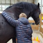 Paardencoaching of Equine Assisted Coaching