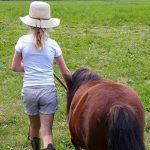Jibaco coaching met paarden